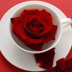 <b>Чем полезен чай каркаде?</b>