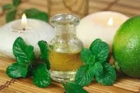 Мятное масло спасет волосы от выпадения