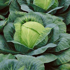 Здоровое питание поможет убрать лишние жиры