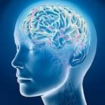 <b>Мозг может постареть из-за ожирения</b>