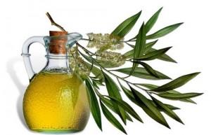 Косметические свойства масла зеленого чая