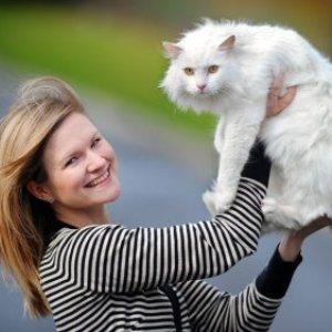 Кошки способствуют увеличению продолжительности жизни