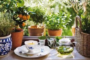 Травяной чай на грядке
