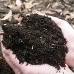 Новый вид антибиотиков найден в почве